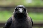 1-smarts-crow-670[1]