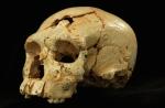 dnews-files-2014-06-Ancient-human-skull-140619-670x440-jpg[1]