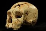 hominin-skull-1[1]