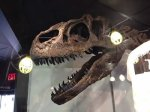 fossil-allosaur-skull[1]