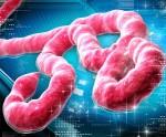 Ebola_Image_2-300x248[1]