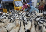 sacrificial-goats-in-india[1]