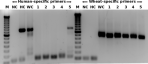 fig_1_host_dna[1]